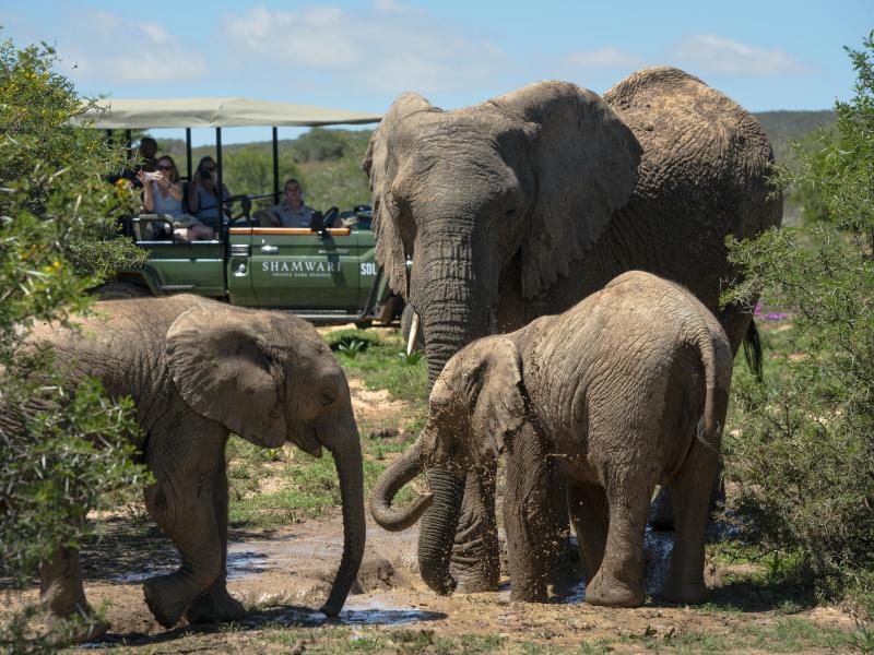 shamwari-game-reserve-elephants.jpg