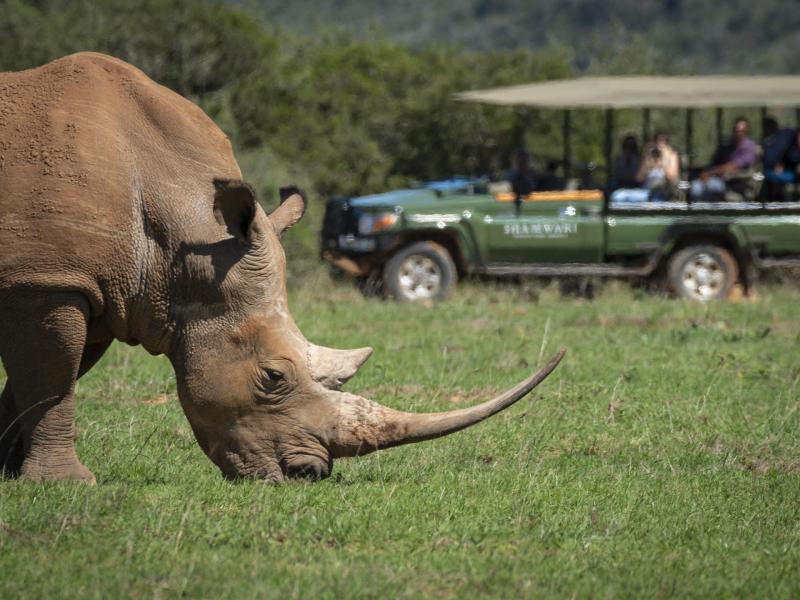 shamwari-game-reserve-rhino.jpg