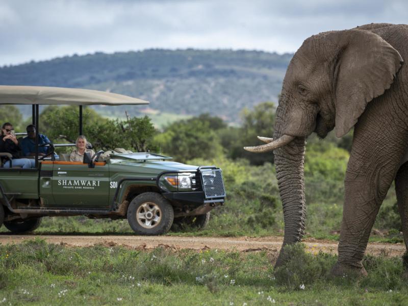 shamwari-game-reserve-safari-elephant.jpg