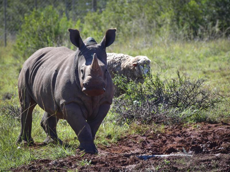 shamwari-game-reserve-white-rhino.jpg