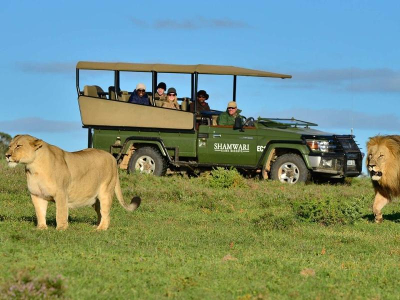 shamwari-game-reserve-zuid-afrika-big-five-safari-lions.jpg