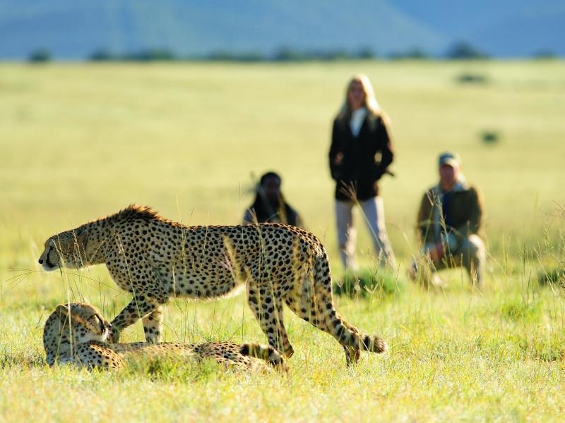 shamwari-walking-safari-5.jpg