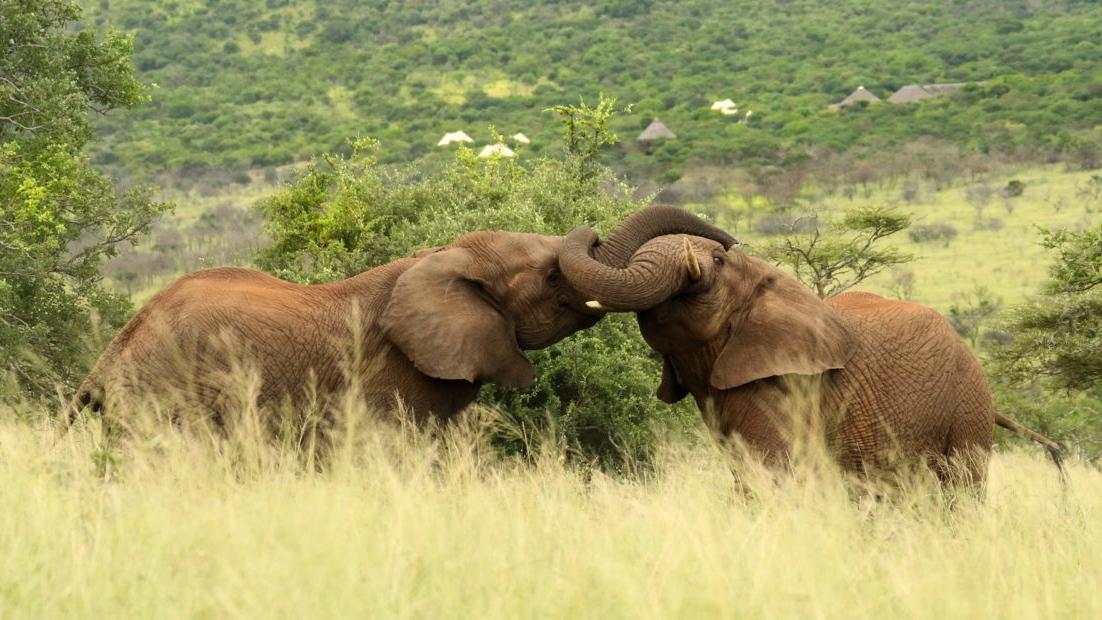 ttc043-tented-camp-with-elephants-photo-by-christian-sperka-1200x620.jpg