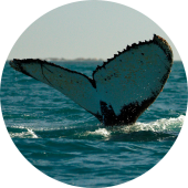 walvissen-spotten-zuid-afrika-11-1.jpg