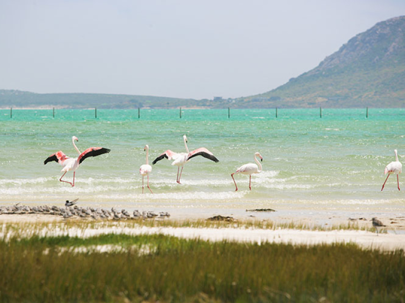 west-coast-national-park-wildlife.jpg