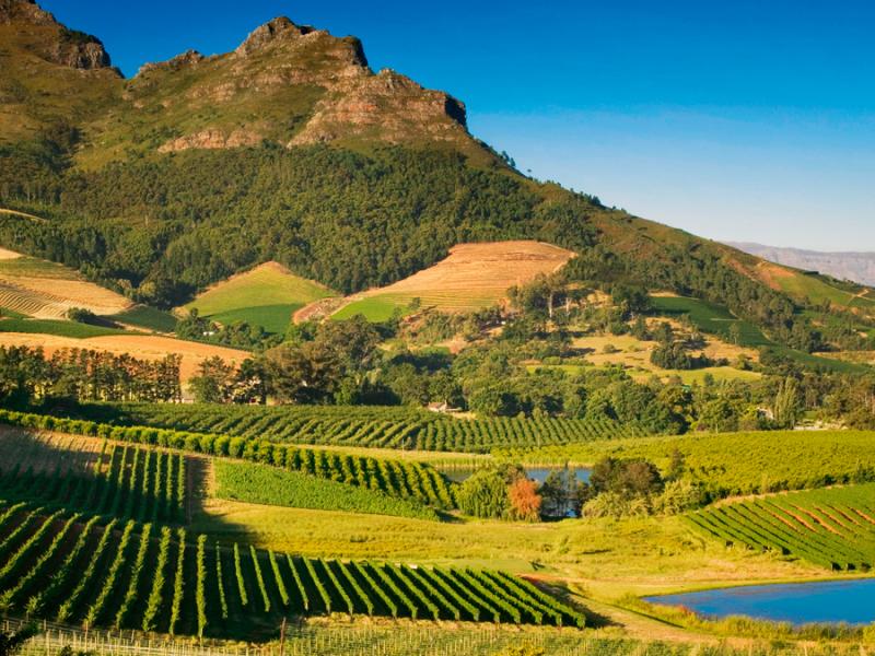 wijnbouw-in-de-regio-wellington-zuid-afrika.jpg