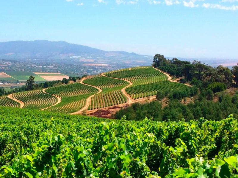 wijngaarden-nabij-wellington-zuid-afrika.jpg