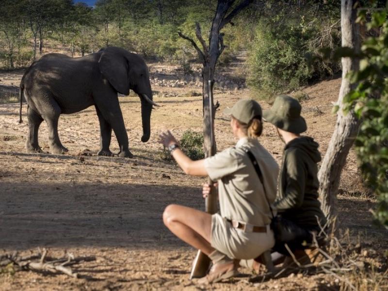 ngala zuid afrika safari
