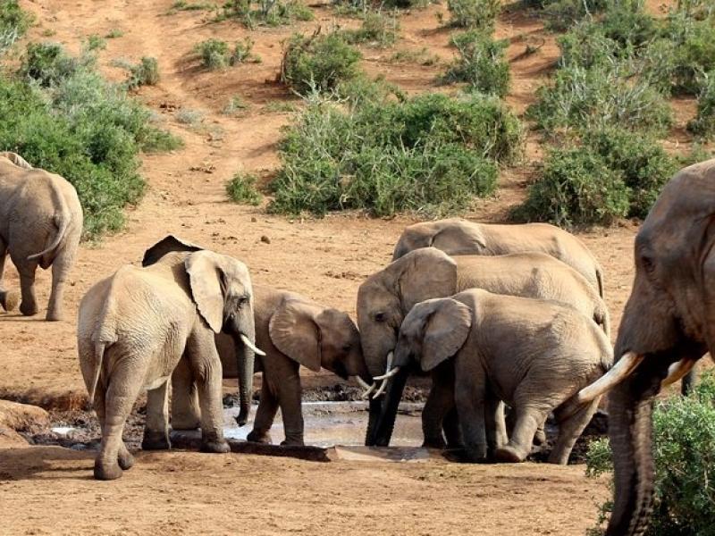 addo elephant zuid afrika