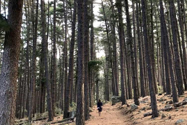 to-do-kids-newlands-forest