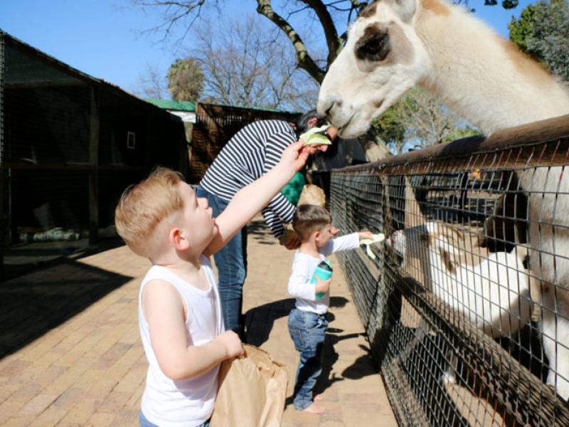 stodels-animal-farm-playground-to-do-kids