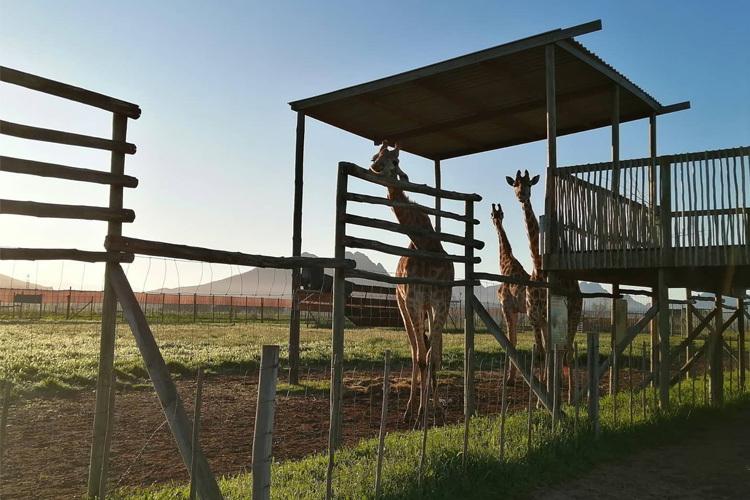to-do-kids-giraffe-house
