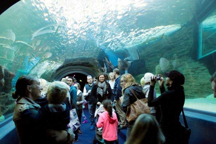 two-oceans-aquarium-to-do-kids