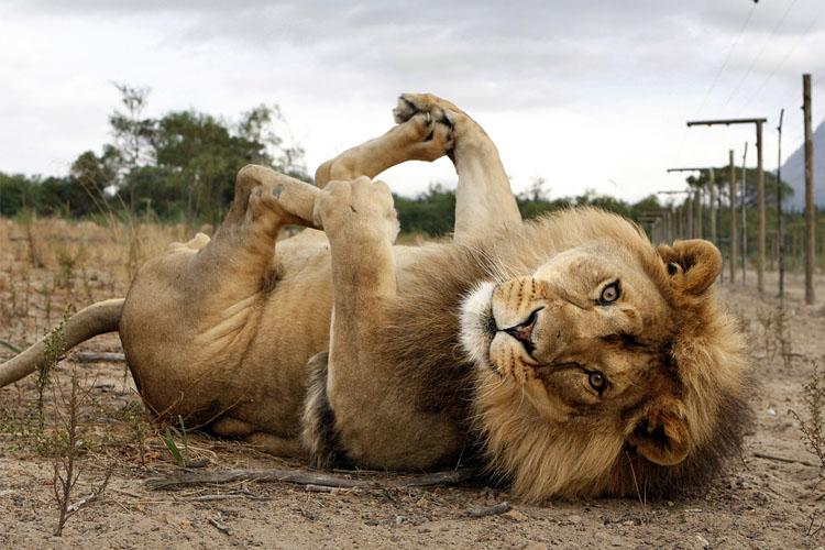 drakenstein-lion-park-to-do-kids