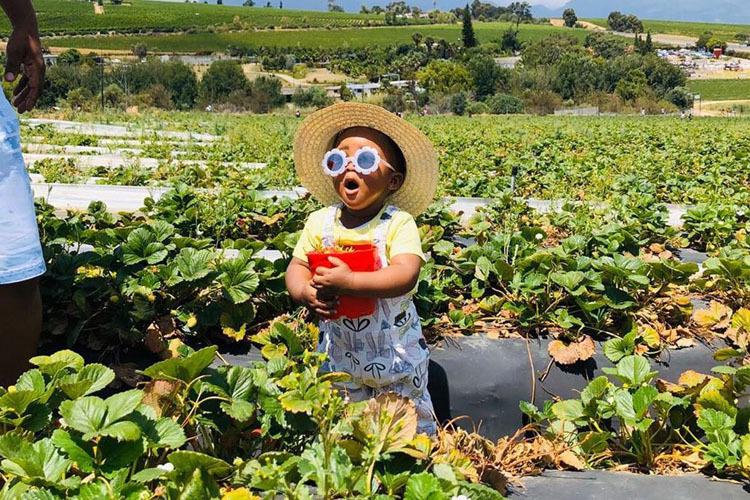 to-do-kids-polkadraai-strawberry-farm