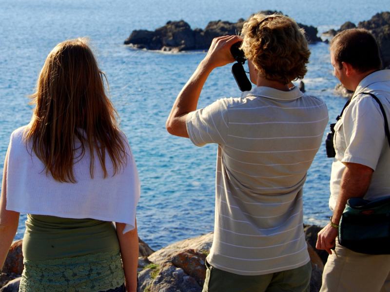 best-land-based-whale-watching-in-the-world