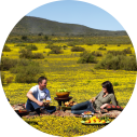 picnicken kaapstad wijnlanden