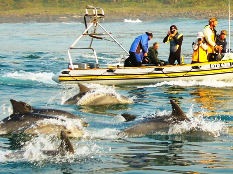 dolfijnen spotten in zuid afrika kleine boot