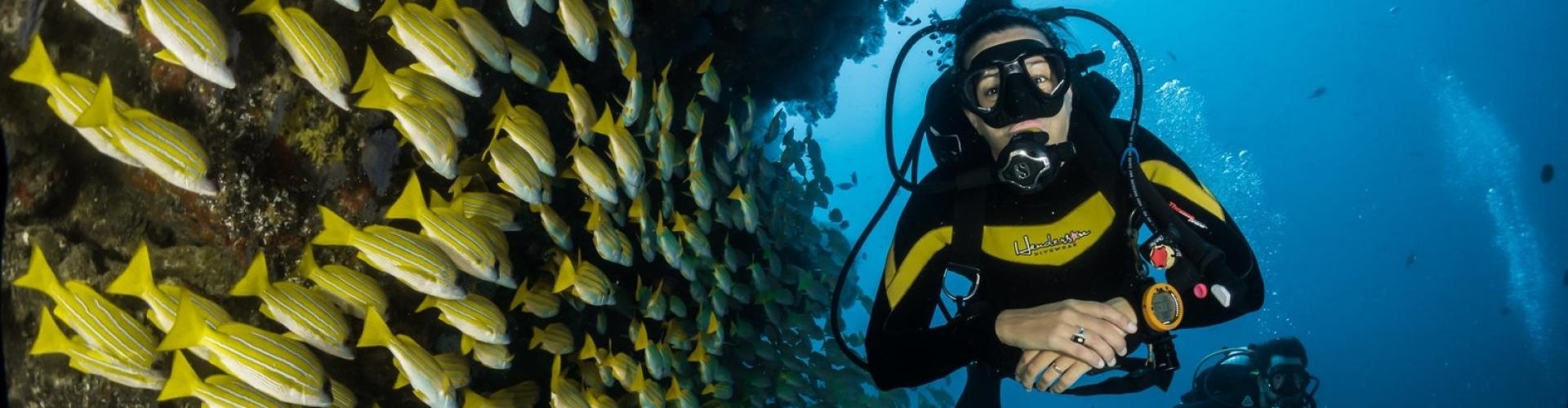 duiken-naast-vissen-en-koralen-zuid-afrika