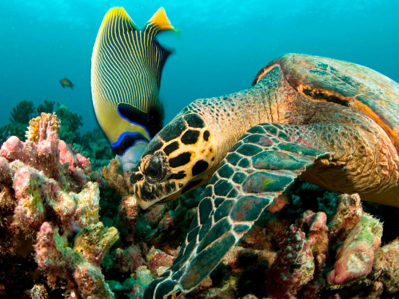 duiken-op-de-seychellen