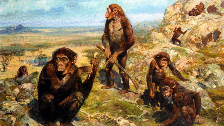 geschiedenis-australopithecus_africanus_by_zdenek_burian