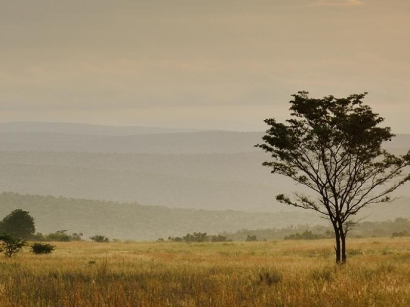 header-north-west-province-madikwe-welgevonden-informatie-zuid-afrika-1920x500-1