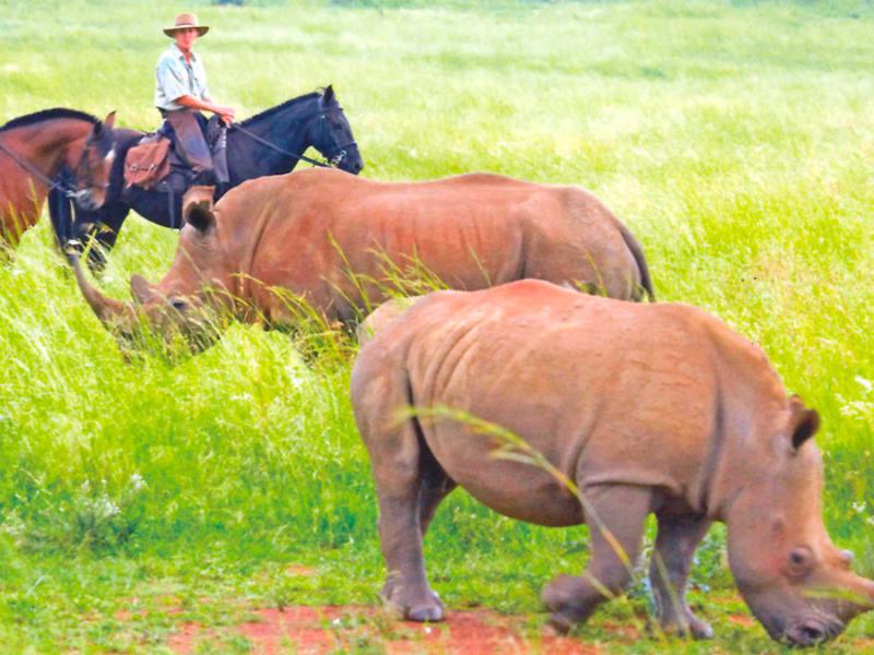 horseback-safaris-in-zuid-afrika