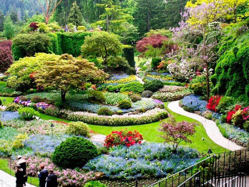 kirstenbosch gardens in zuid afrika botanical garden