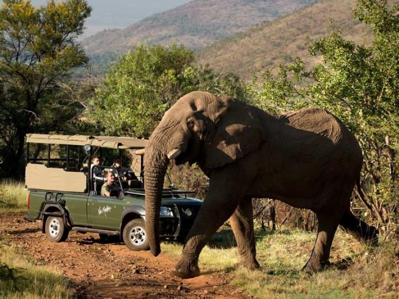 pilanesberg zuid afrika safari