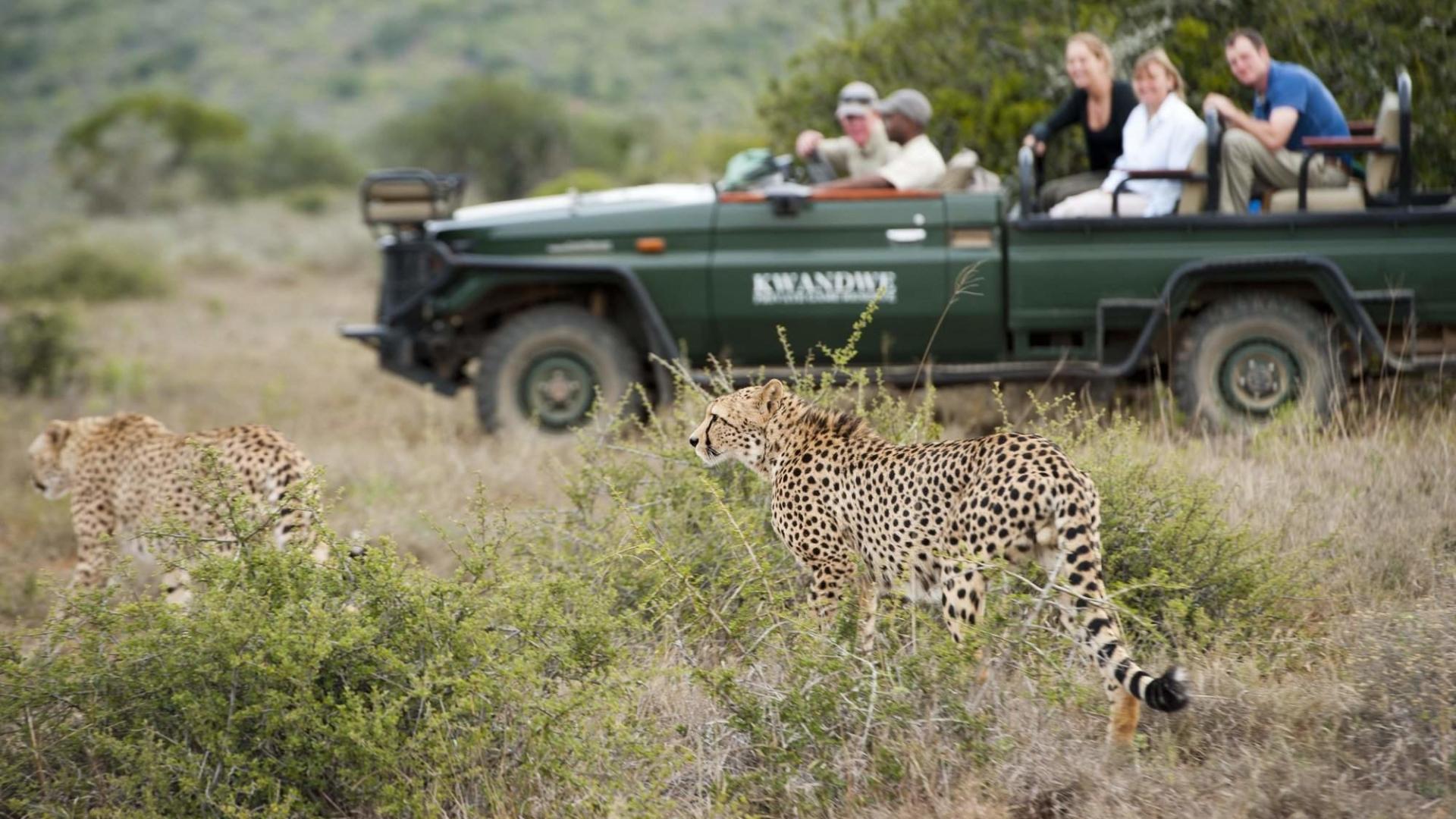 kwandwe-game-reserve-zuid-afrika-big-five-luipaard