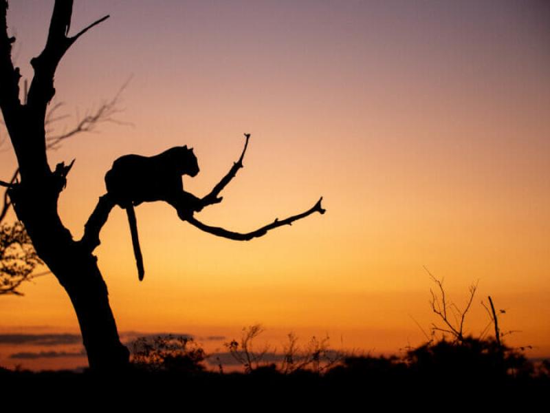 sabi sands zuid afrika leopard