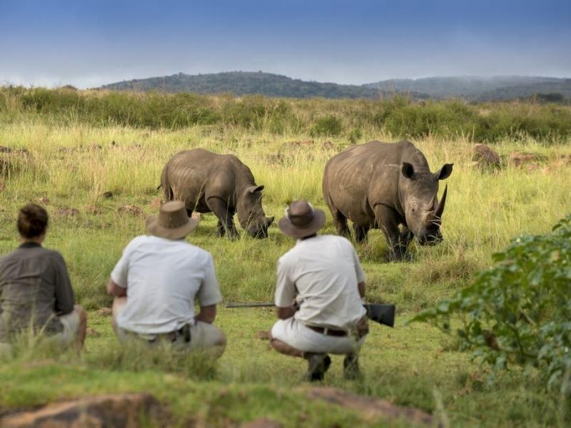 welgevonden zuid afrika safari