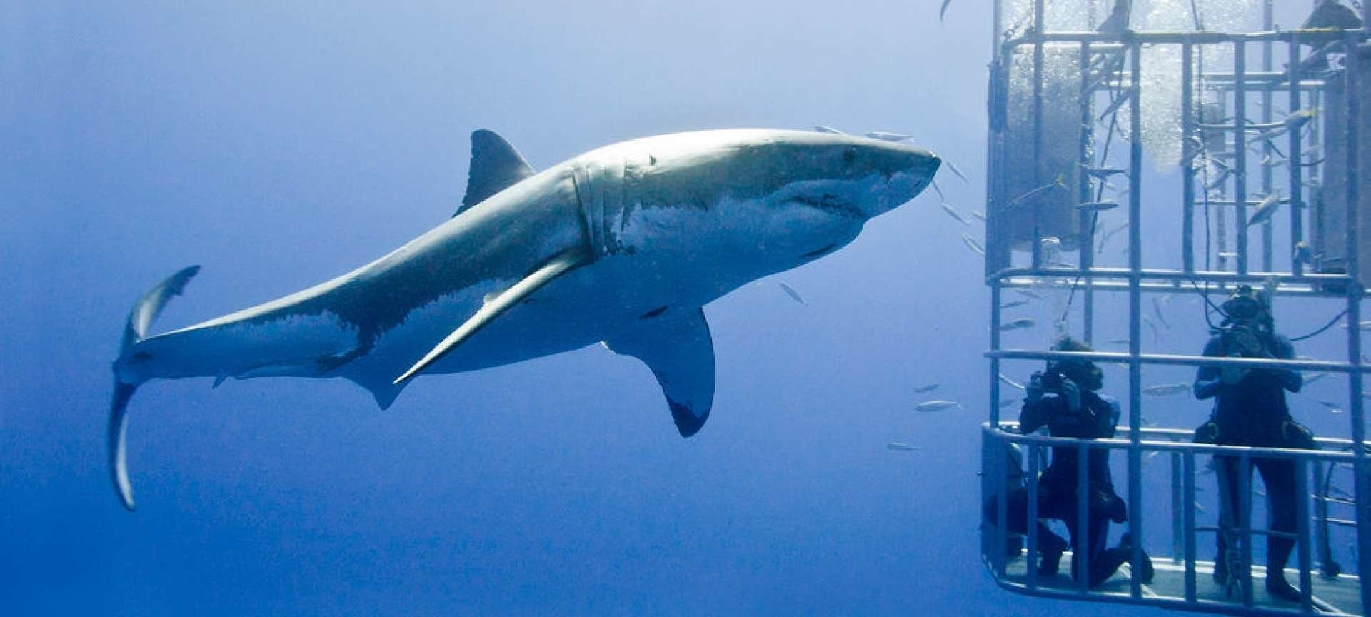 mossel-bay-shark-cage-diving