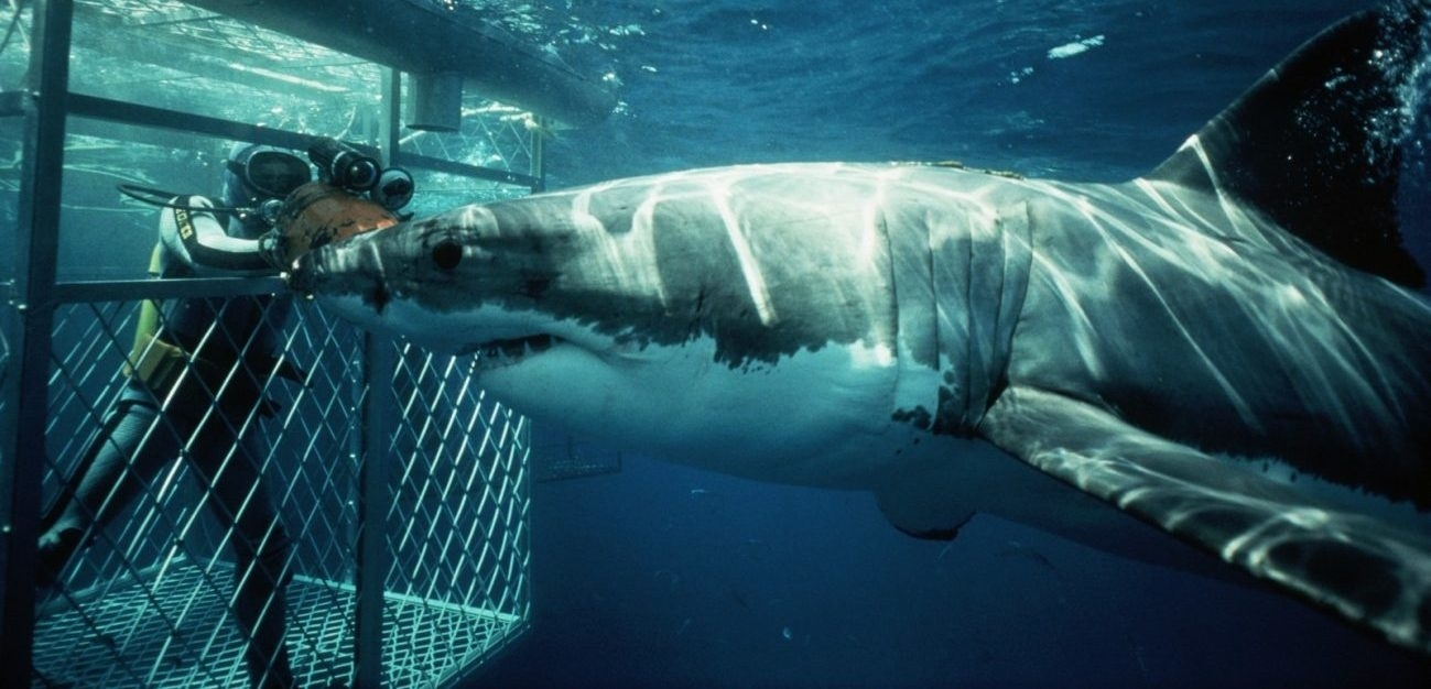 mossel-bay-shark-cage-diving2