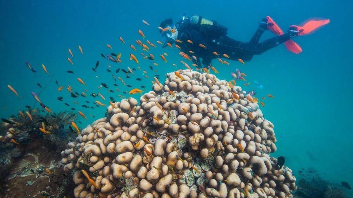 mozambique-duiken-snorkelen