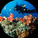 mozambique duiken