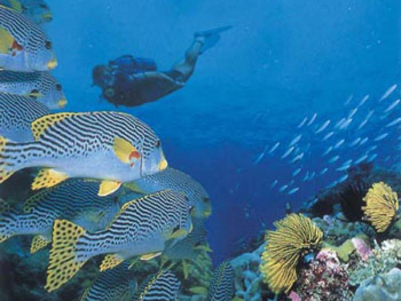 mozambique onderwaterleven