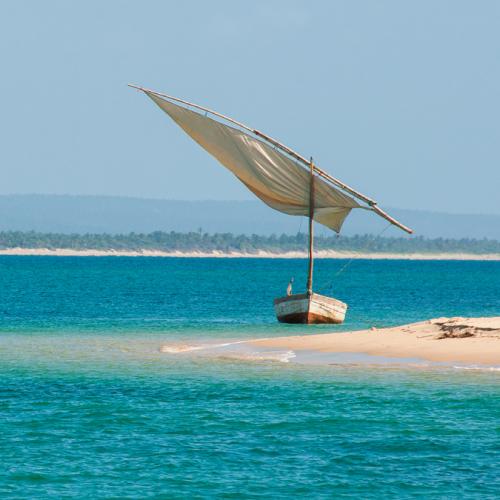 mozambique pansy island