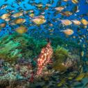 onderwaterwereld-zuid-afrika