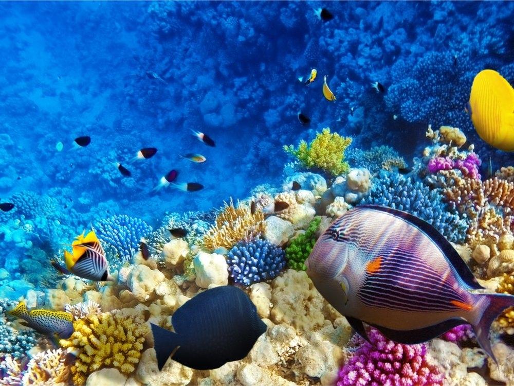 onderwaterwereld-zuid-afrika2