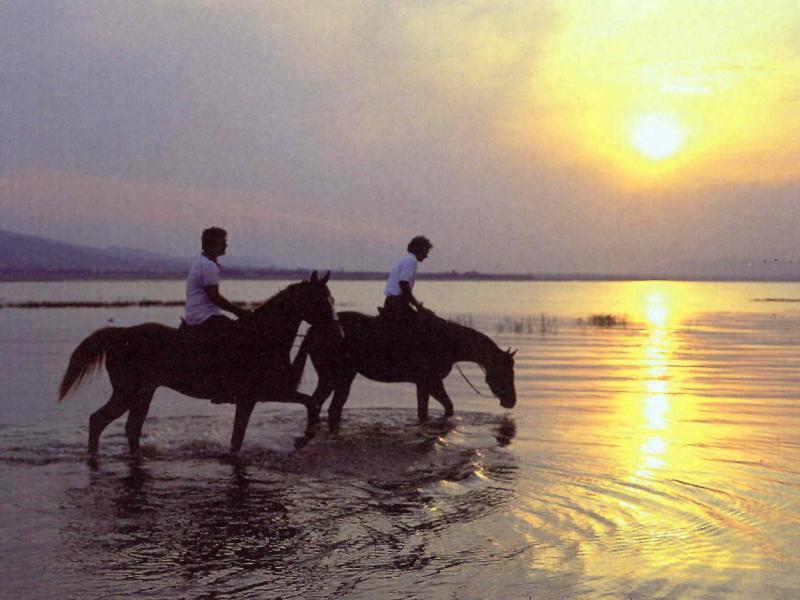 paardrijden in zuid afrika op stranden kaapstad garden route
