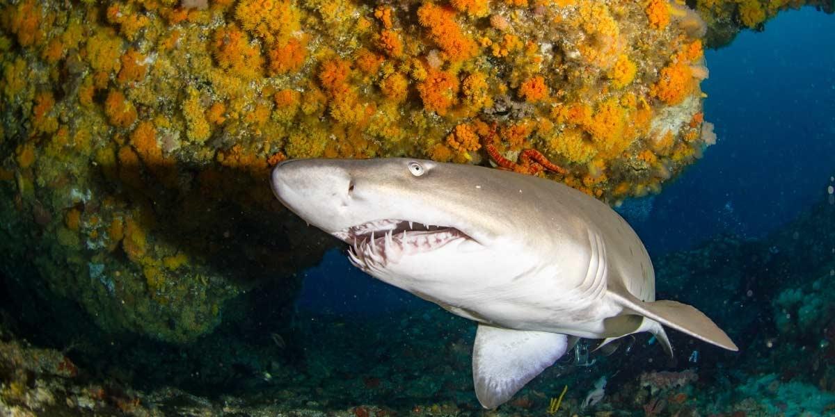 raggie-cave-shark-alley-aliwal-shoal-kwazulu-natal-2