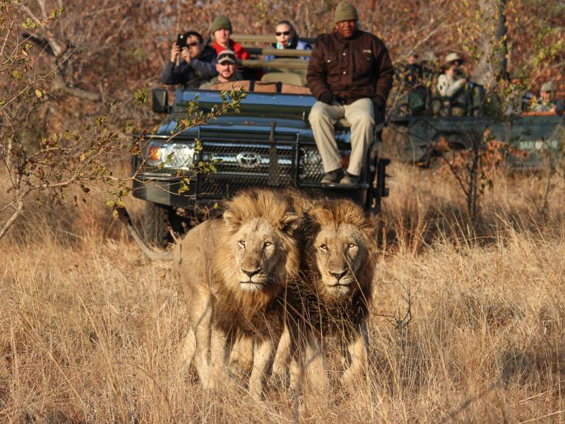 sabisabi-lions