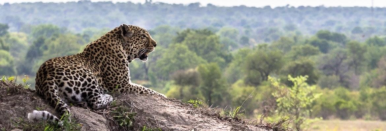 safarireizen-zuid-afrika-leopard-game-reserve