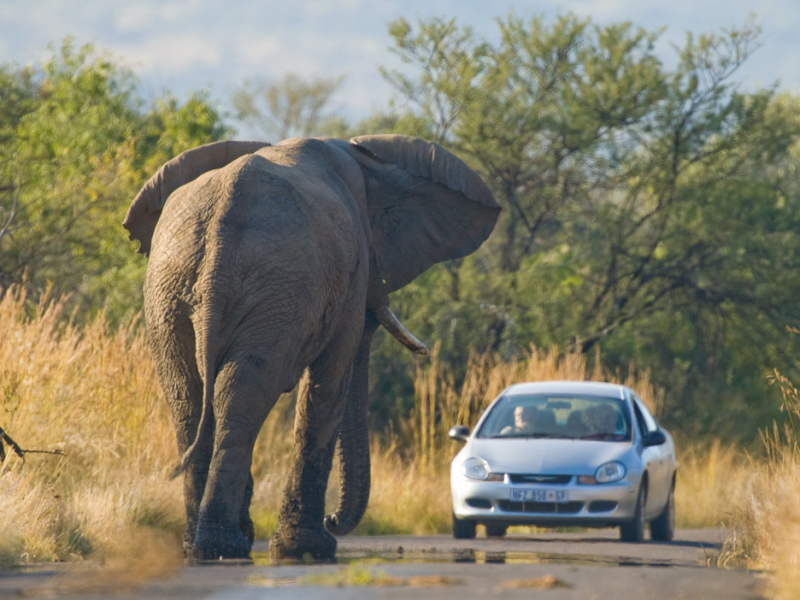 self-drive-safari-in-zuidelijk-afrika