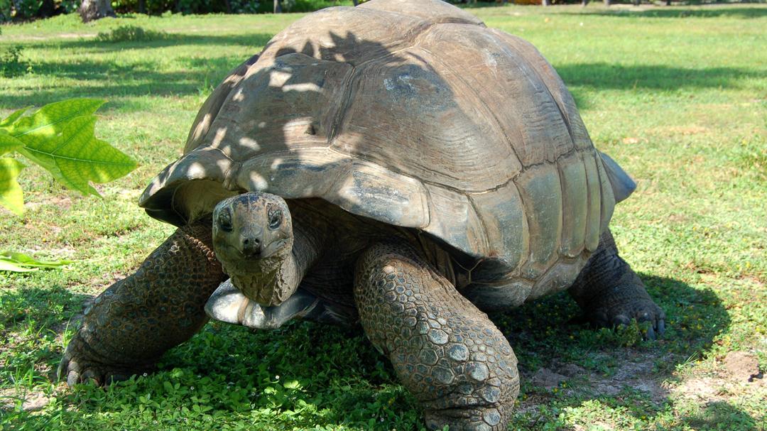 buurlanden seychellen zuid afrika reuzeschildpad