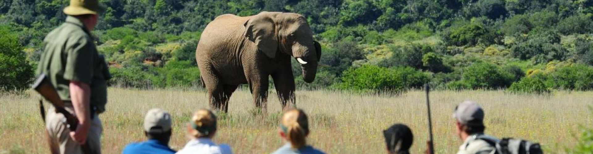 shamwari-game-reserve-walking-safari-elephant