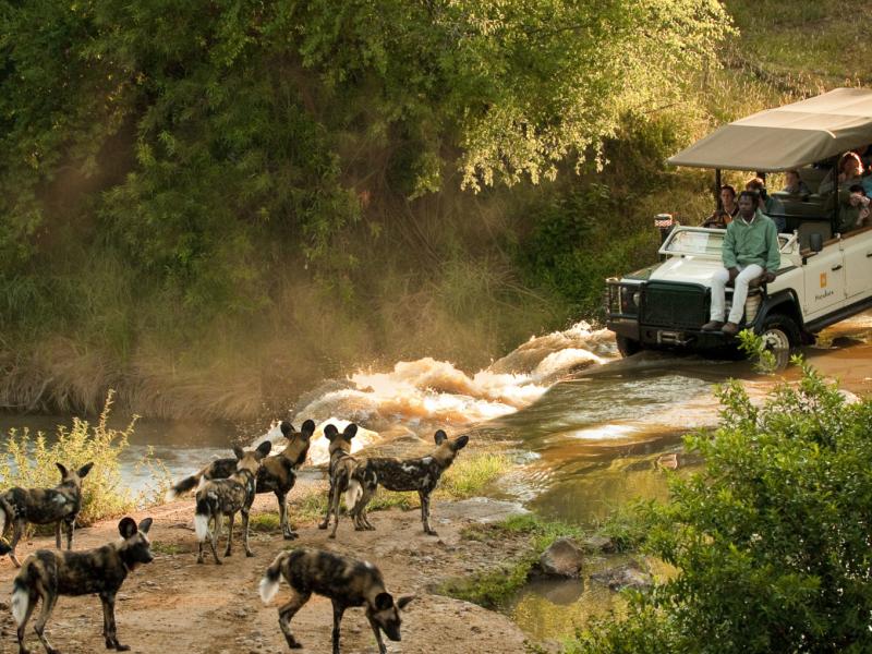signature-droomreizen-gold-morukuru-river-house-gamedrive_with_african_wild_dogs