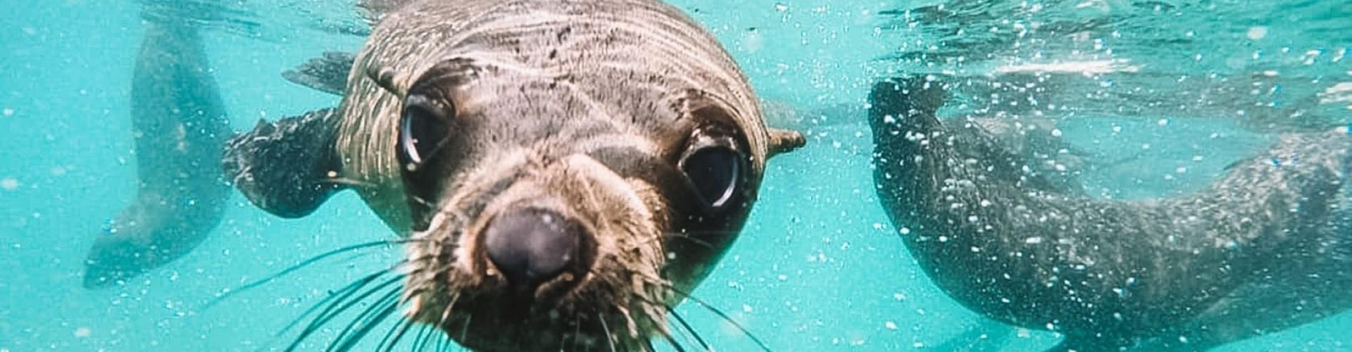snorkelen-in-zuid-afrika-met-zeehonden