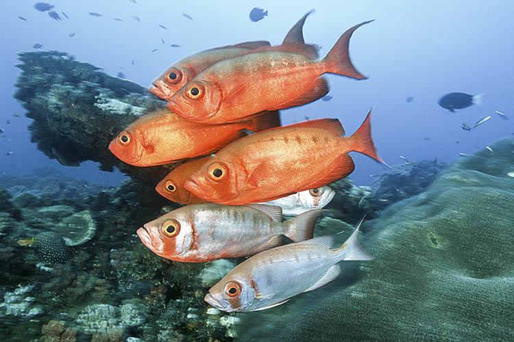 sodwana-bay-vissen